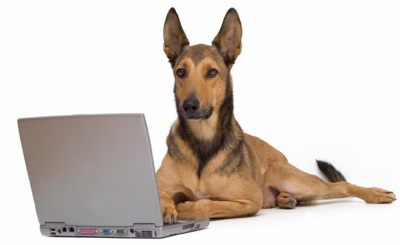 email dog